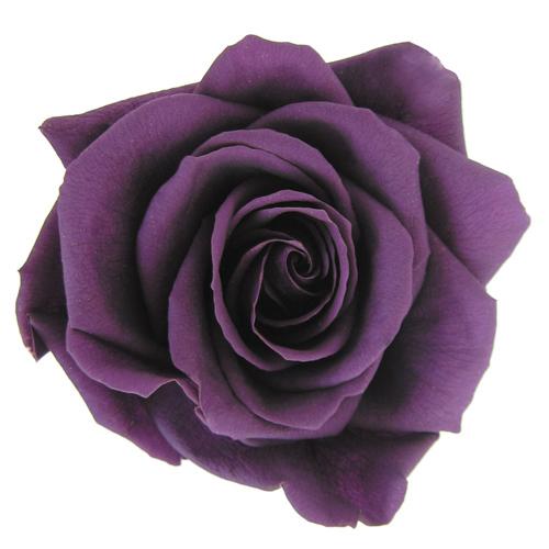 #18 Violet