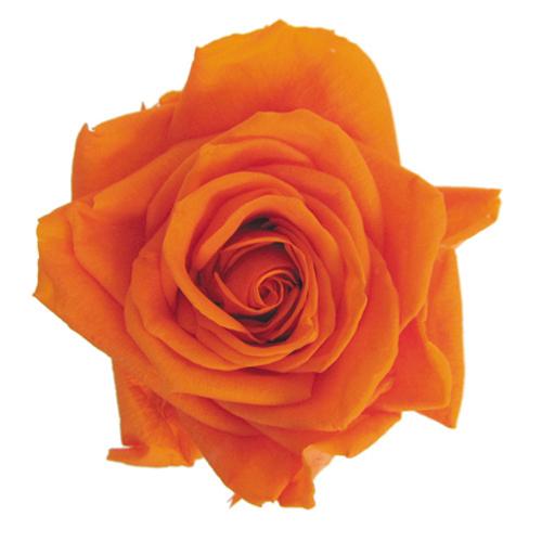 #29 Tangerine Orange