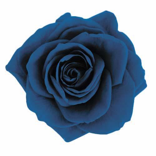 #59 Majolica Blue