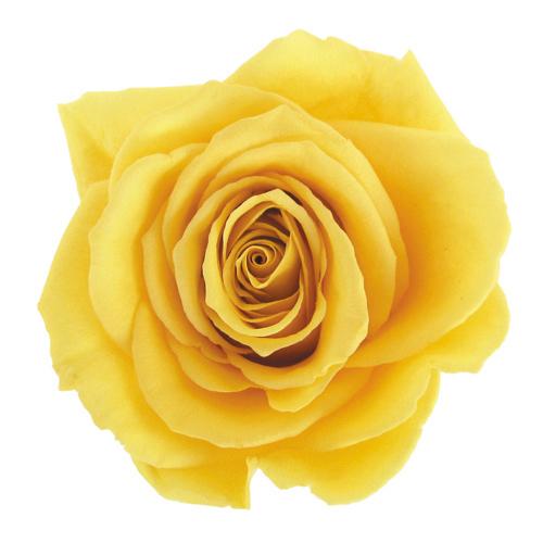 #2 Yellow