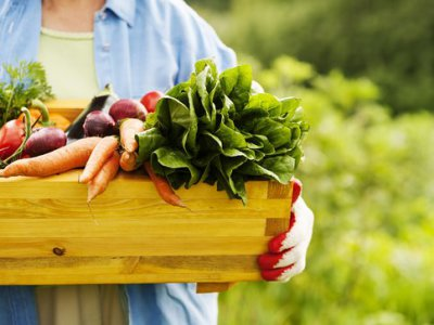 Farm Fresh Veggies: