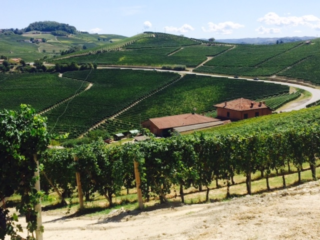 Viinikukkuloiden vitaalinen kauneus