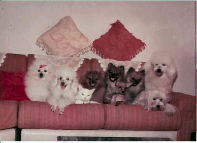 Before 1989 Family portrait at Rightroyale Kennel