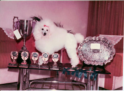 """""""Andoh"""" a Malaysian Champion in 1977 had won many in-show MKA prizes. Imported from New Zealand."""