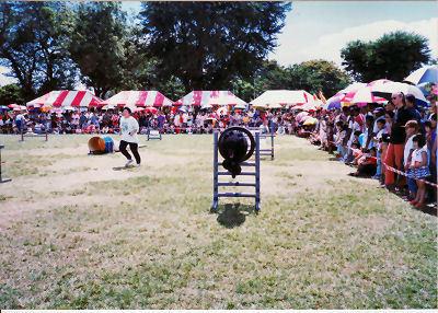 Adwin doing agility demo  in 1999.