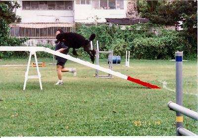 Adwin on a dog walk in 2000.