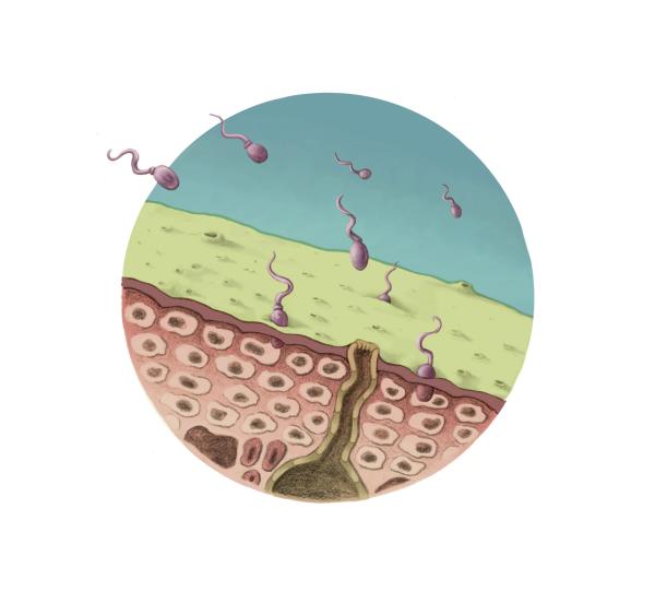 Chitrid Fungus Stage 1