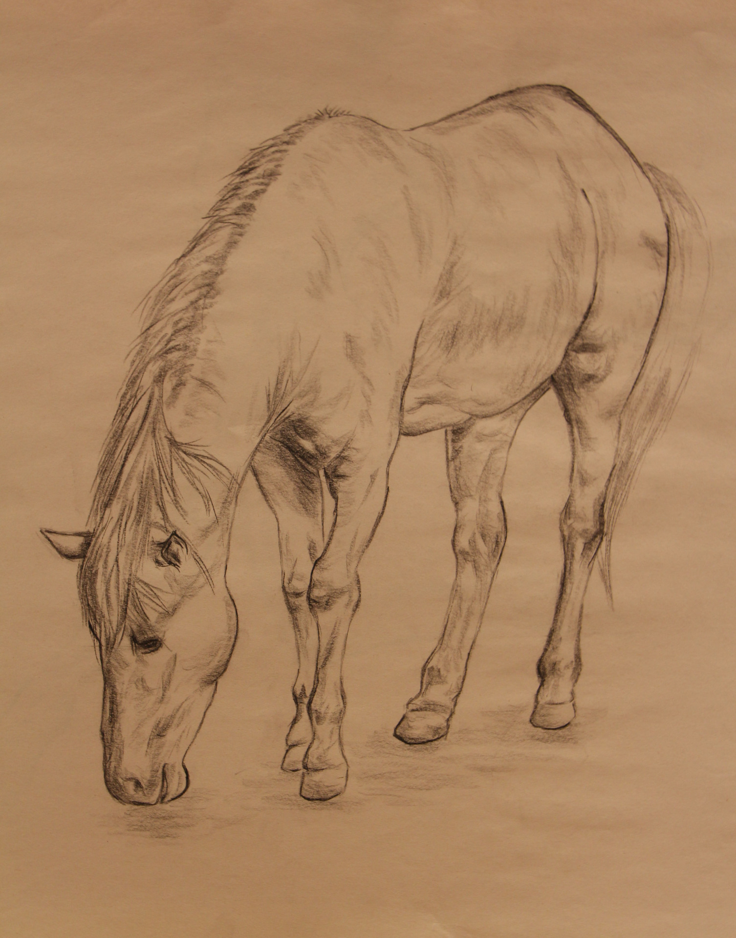 Anatomy Study - Horse