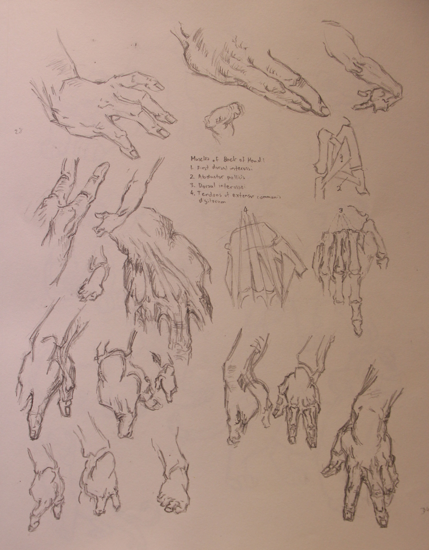 Anatomy Study - Hands Realism