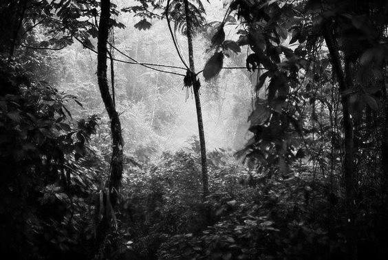 Dark Is The New Light - Jungle