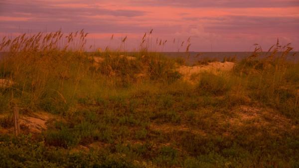 Hilton Head Dunes #1