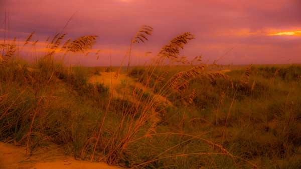 Hilton Head Dunes #2