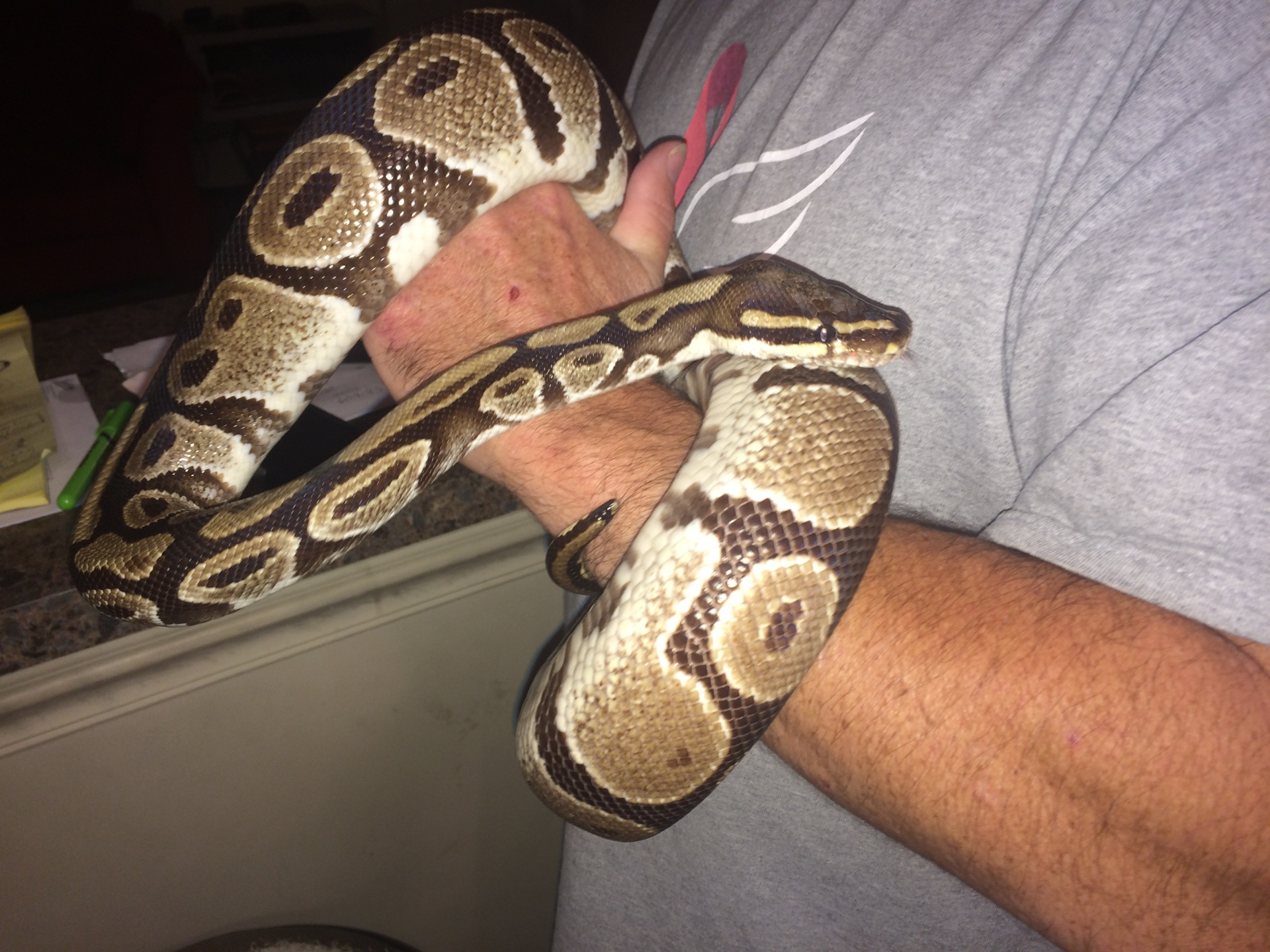 Adopted 6 Dec. Hampton Roads Reptile Exp