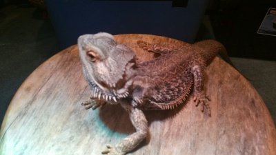 Adopted 6 Dec. Hampton Roads Reptile Expo