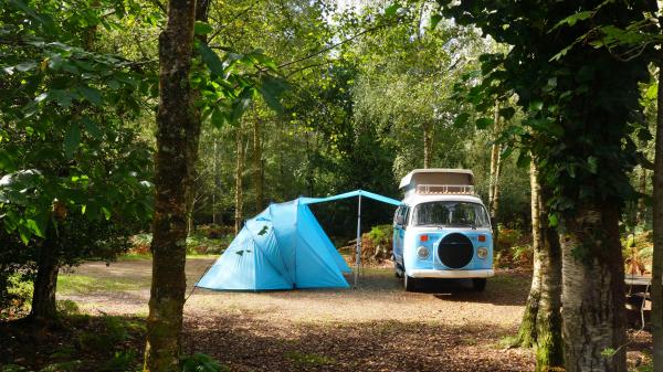 Woodland Oasis