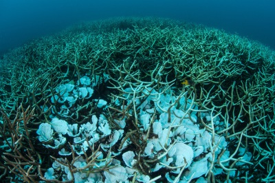 Coral Bleaching Hits The Great Barrier Reef After Australia Temperatures Break Records