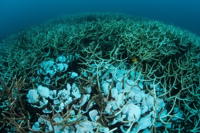As coral reefs die, ocean floor erodes