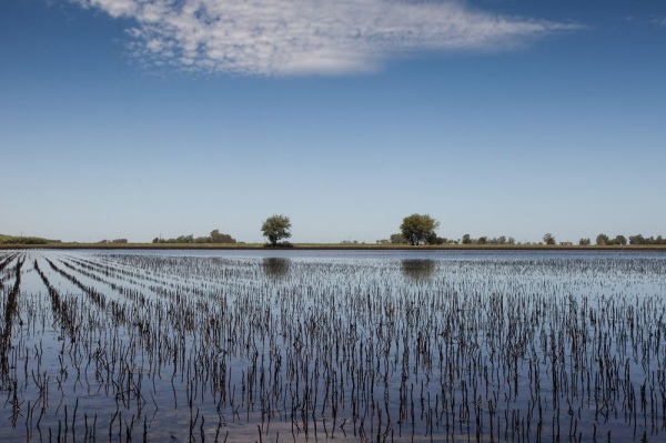 Climate Change Could Dampen Argentina's Recovery