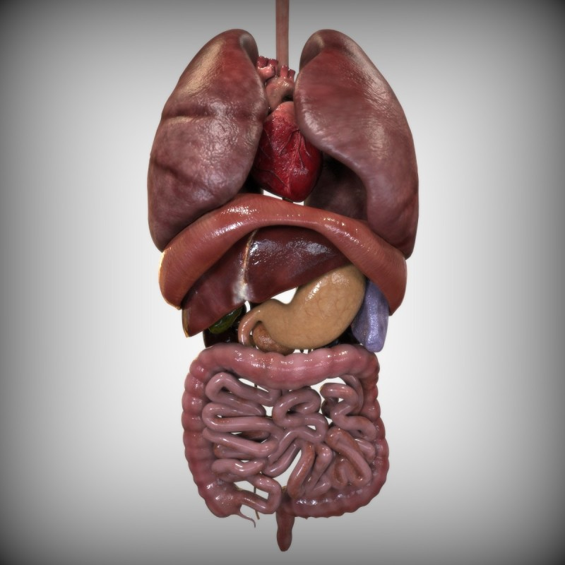 Zang-Fu Organs Theory; An eastern standpoint on the internal organ system
