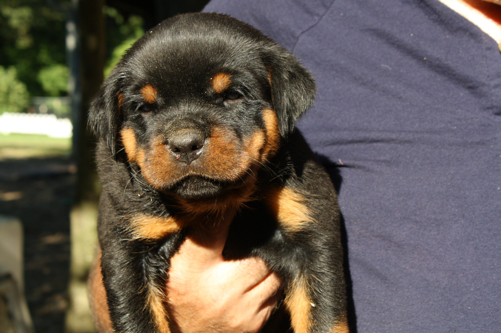 Brown Male-Sold to Mark