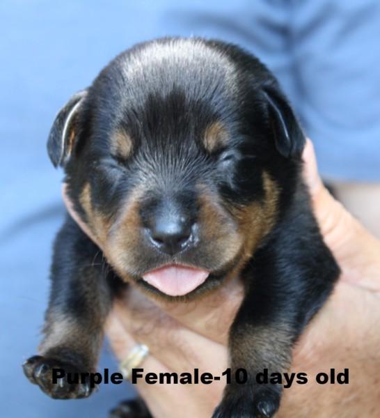 Purple Female