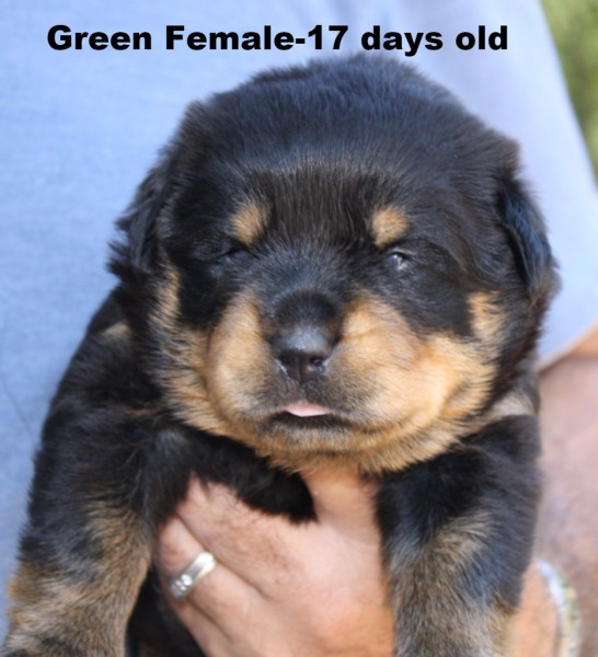 Green Female
