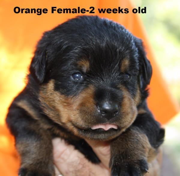 Orange Female