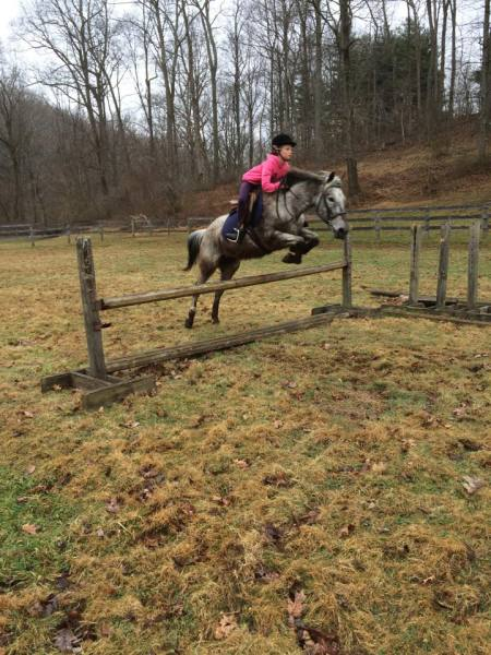 Capall Milis, Squeaky, Cassidy, Stable, Farm, Horse, Lessons, Boarding, Maryland