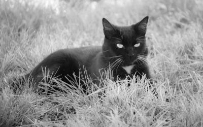 """""""CAT in the GRASS"""" - Dale Wood"""