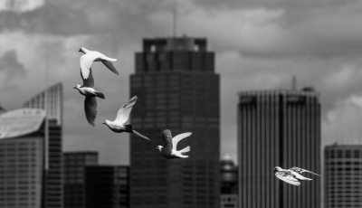 """""""DOVES and TALL BUILDINGS"""" - J"""