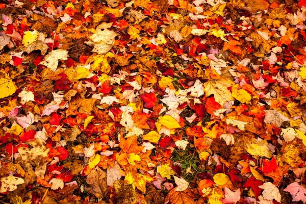 Quilt of Fall Colors