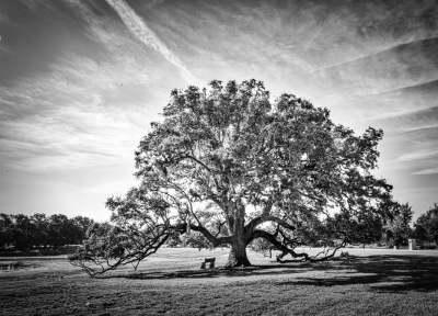 """LONE TREE"" - Linda Knox"