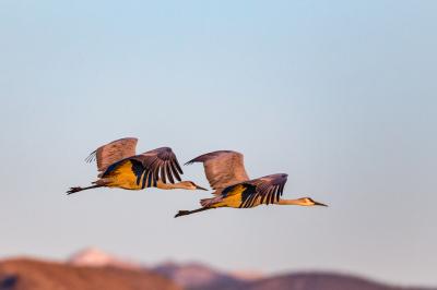 Color - Cranes - Jorgen Hog