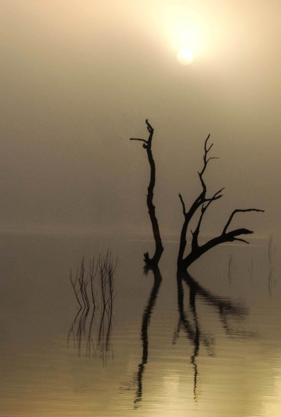 Assignment - Foggy Dawn - Dennis Deeny