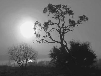B&W - Fog - Dennis Deeny