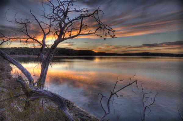Assignment - Tired Tree - Darryl Patrick