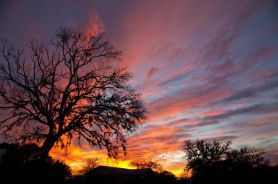 Color - Treefire - Darryl Patrick