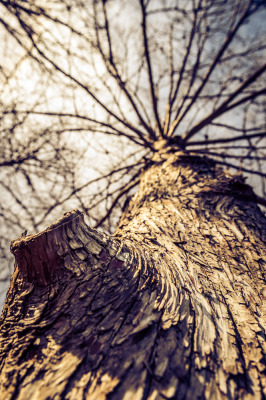 Color - Barking Up The Right Tree - Allen Skiles