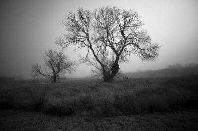 B&W - Early Morning Trees - David Goodge