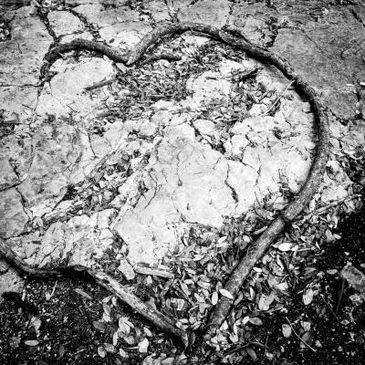 B&W - Broken Heart - Sandy Gilbert
