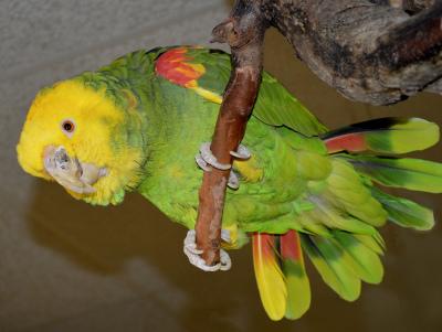 Color - Polly - Marilyn Brinker