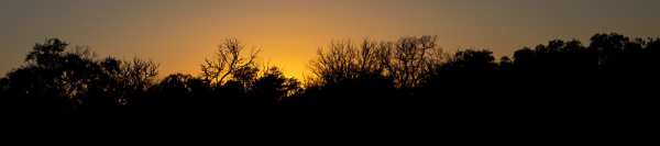 Assignment - Canopy Sunset - Eric Olsen