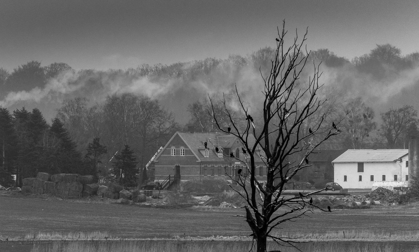 B&W - Farmhouse and Rooks - Mary Hulett