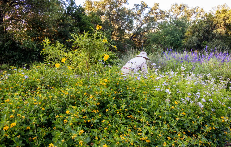 Assignment - Morning Gardening - Mary Hulett