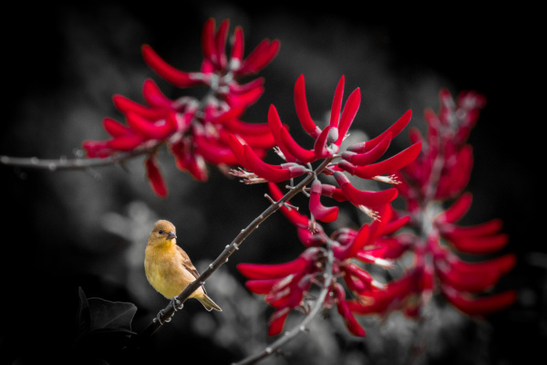 Assignment - Garden of Blooms and Birds - Jorgen Hog