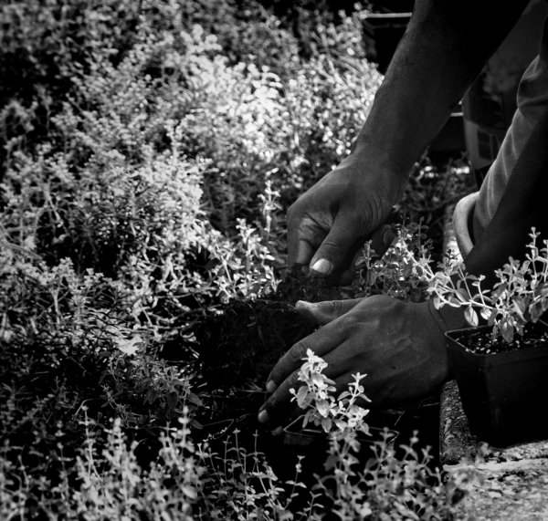 Assignment - Gardener's Hands - Linda Knox