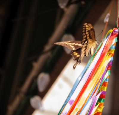 Color - Butterfly - Homer Gilbert