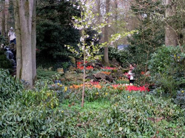 Assignment - Tulip Rock Garden Keukenhof, The Netherlands - Lee Rahe