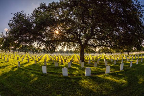 Assignment - Fallen Soldiers - Dennis Deeny