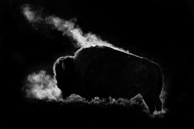 B&W - Cool Morning in Yellowstone - Jorgen Hog